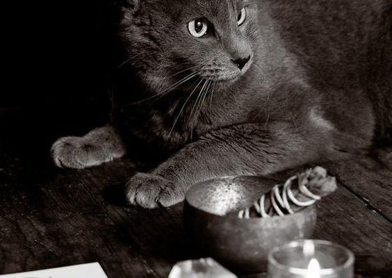 cat zodiac signs & cat astrology